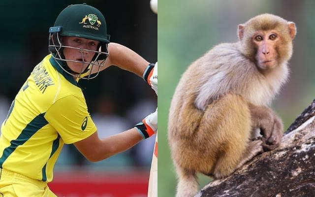 U19 World Cup 2020: Fraser-McGurk to Return Home After Being Scratched on Face by Monkey